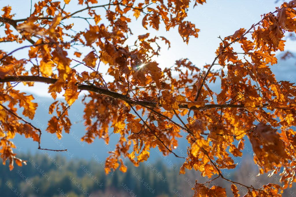 Tree branch with yellow leaves. Autumn landscape.