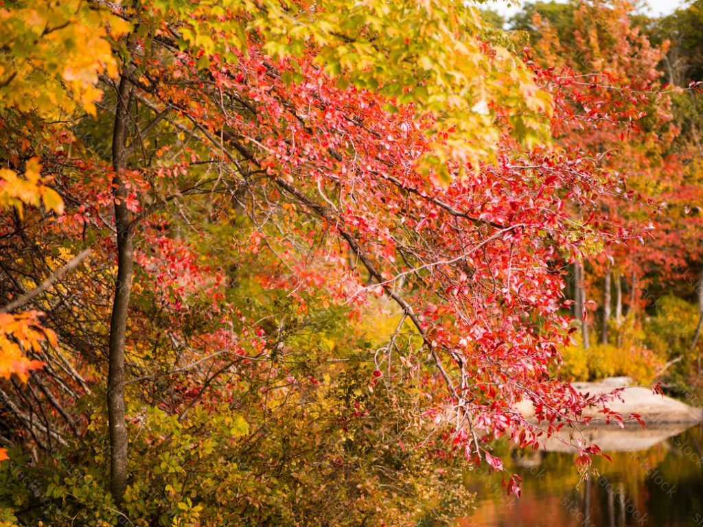 Autumn trees with a pond