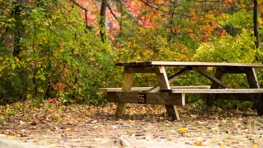 Park bench with autumn trees