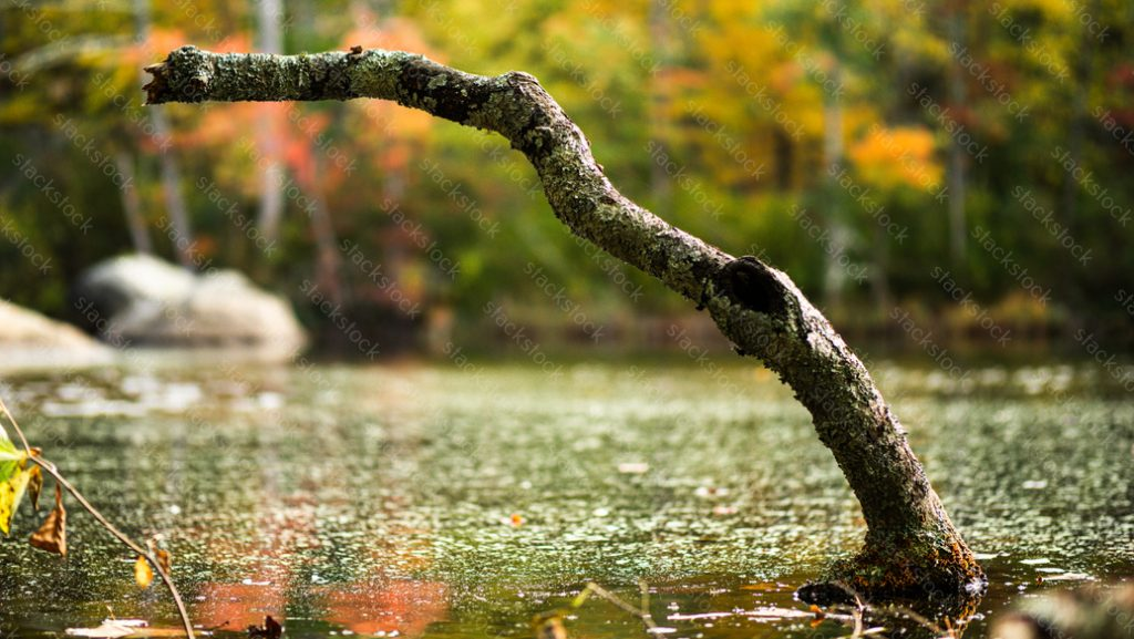 Branch in the water during autumn
