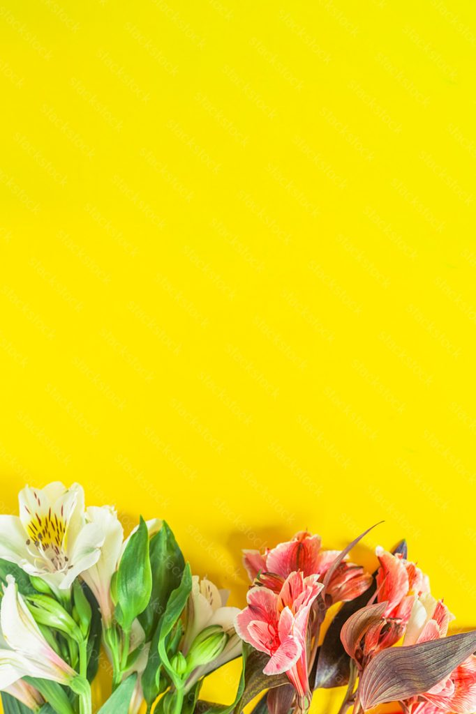 Flowers with copy space on yellow background