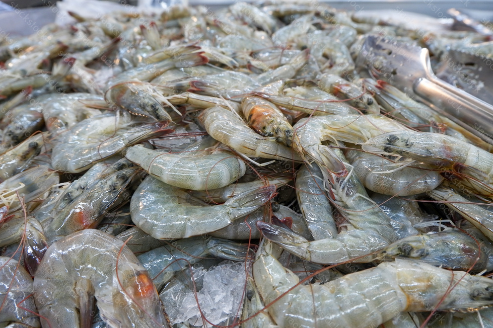 Shrimp in the fresh market