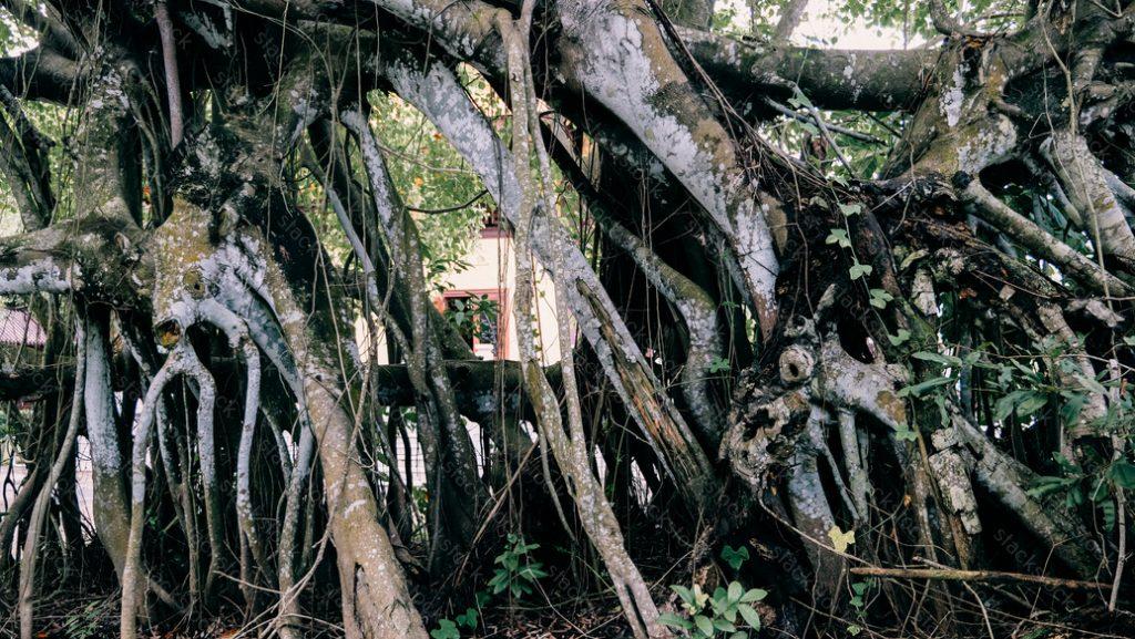 Tree at a pagoda