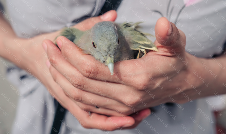 Bird in the Hand