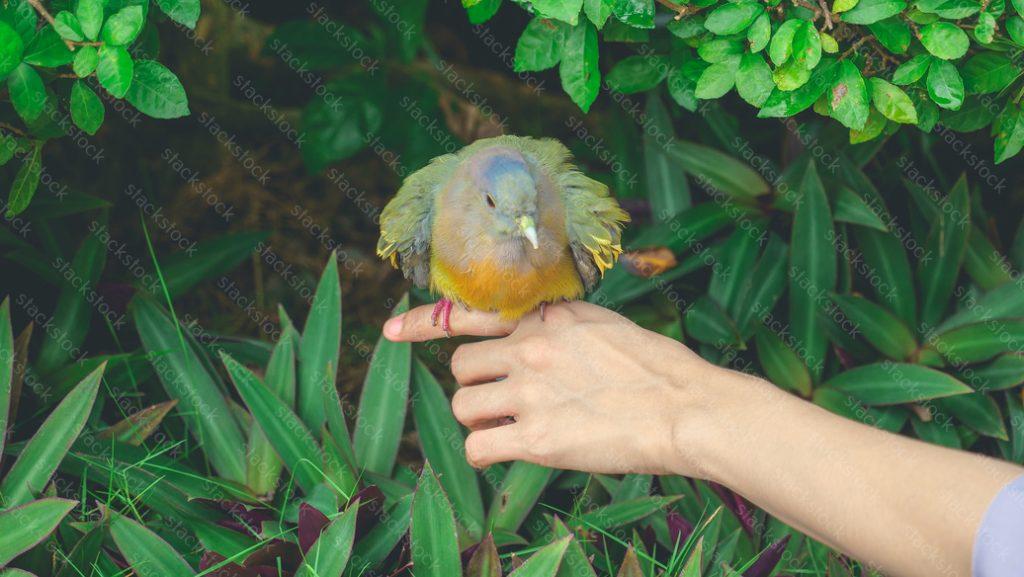 Female hand holding a bird