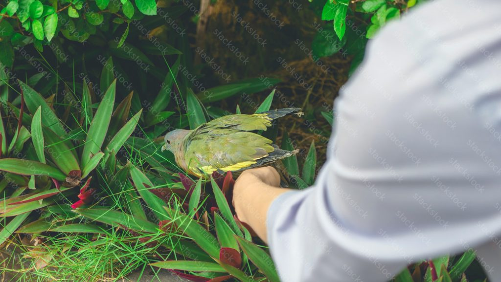 Womans hand holding a young bird