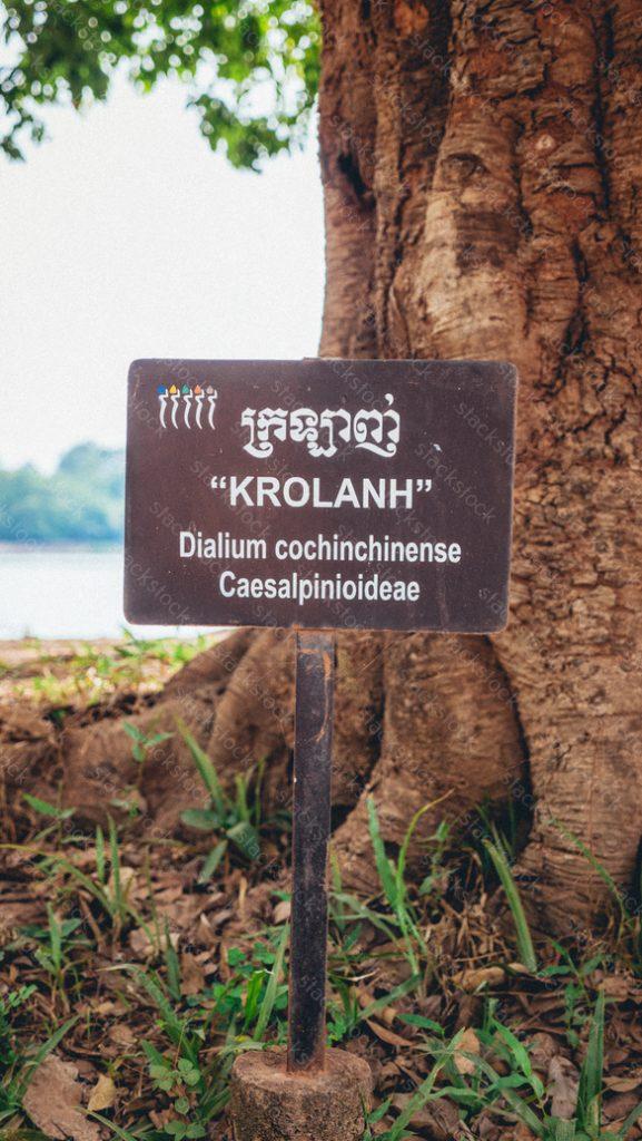 Signage of tree desciption at Angkor Wat, Siem Reap Cambodia