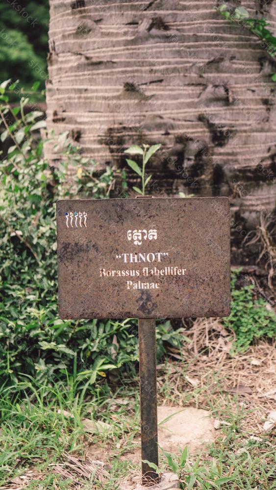 Sign for tree description at Angkor Wat, Cambodia