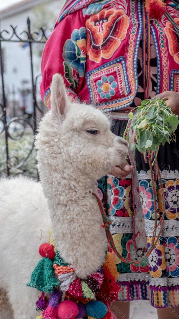 Women with alpaca in Peru