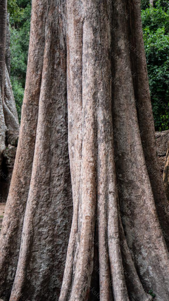 Tree roots, Ta Prohm Temple, Angkor, Cambodia