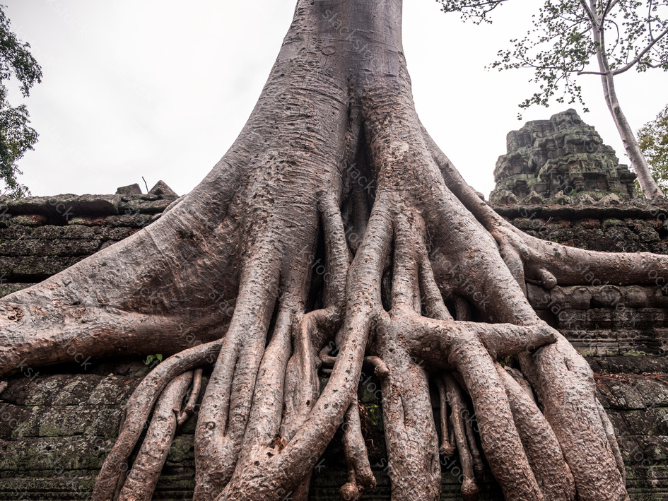 Ancient ruins and tree roots, Ta Prohm temple, Angkor, Cambodia.