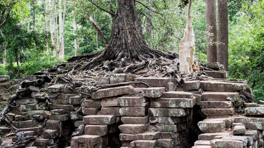 Trees growing on steps of a small temple at Angkor Thom, Siem Reap, Cambodia.